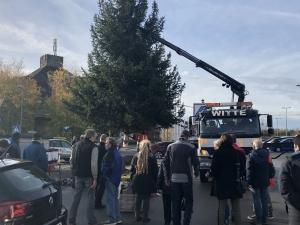 Aufstellen des Weihnachtsbaumes 2019