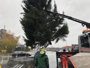 Aufstellen des Weihnachtsbaumes 2018